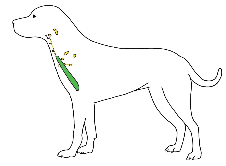 Hundeschule Wasserburg - Wissenswertes